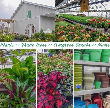 Meadow View Greenhouse Christiana Lancaster County PA Locally Owned Family Operated