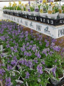 Meadow View Greenhouse & Nursery Christiana Lancaster County PA Locally Owned Family Operated