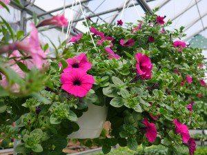 Wayside Greenhouse East Earl Lancaster County PA