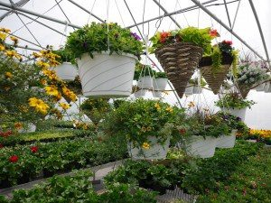 Boulder Ridge Greenhouse New Holland Lancaster County PA