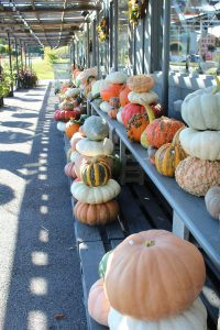 Frey's Greenhouse Lancaster County PA Locally Owned Family Operated Fall Harvest Varieties