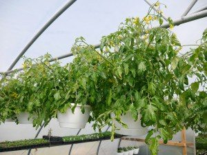 Whispering Willow Greenhouse Terre Hill Lancaster County PA