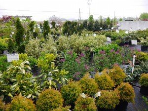 Country Meadows Nursery Ephrata Lancaster County PA