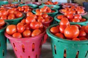 Rolling Gardens Canning Tomatoes Rolling Gardens Farm Market Columbia Lancaster County PA Locally owned Family operated