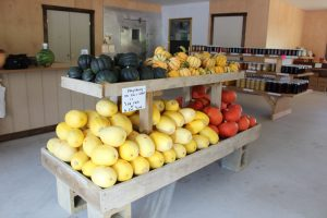 Rolling Gardens Farm Market Columbia Lancaster County PA Family Owned Family Operated Mums & Fall Harvest Varieties