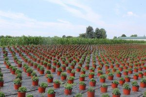 Sensenig's Produce & Flowers Lancaster county pa Farm to Table Locally Owned Family Operated