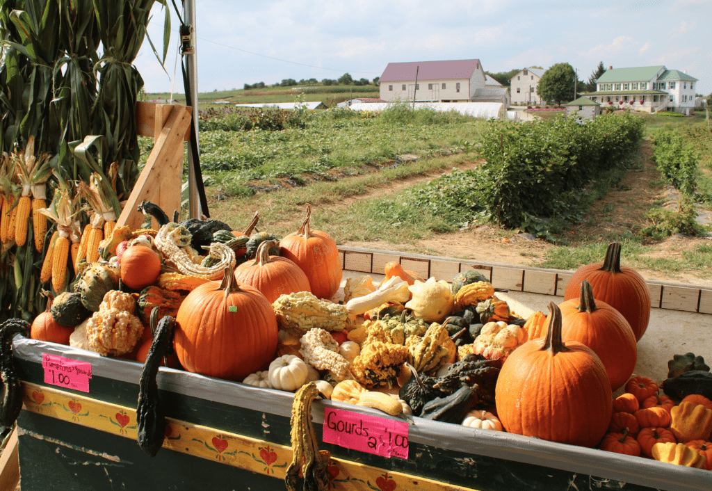 Farm Wagon Produce East Earl Lancaster County PA Locally Owned Family Operated Farm to Table Weaverland Valley Mums & Fall Harvest Varieties
