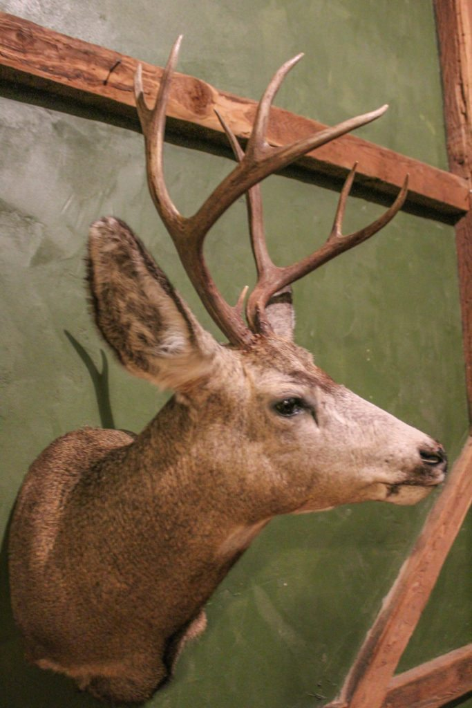 Jr S Taxidermy Real Lancaster Countyreal Lancaster County