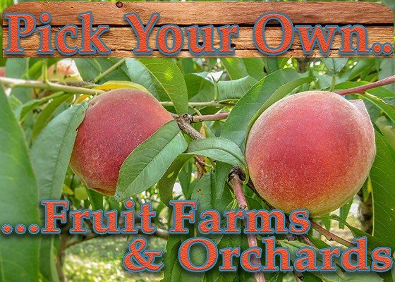 5.16.17 Fruit Farms _ Orchards Sidebar