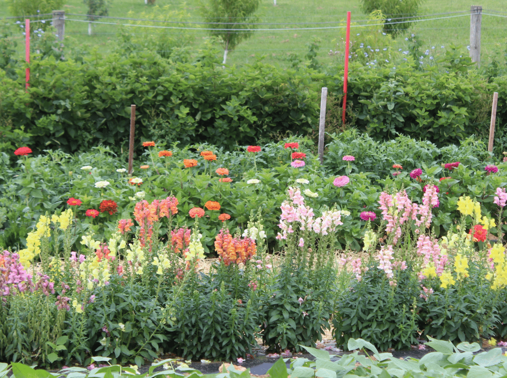 Pick Your Own & Cut Your Own Flowers in Lancaster County PA