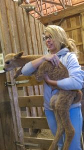 Graystone Ridge Alpacas Manheim Pennsylvania Lancaster County PA Locally Owned Family Operated Boutique alpaca farm fun events alpaca fibers angora goat hair mohair raw washed