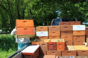 Welsh Mountain Apiaries Meadville Gap PA Locally Owned Family Operated Naturally Grown Practicing Organic wild forage honey fresh unfiltered local raw honey Lancaster County Chester County Southern Lebanon County pollination services Beekeeping Gallery