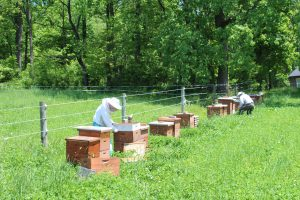 Welsh Mountain Apiaries Meadville Gap PA Locally Owned Family OperatedNaturally GrownPracticing Organicwild forage honey fresh unfiltered local raw honeyLancaster County Chester County Southern Lebanon County pollination services Beekeeping Gallery