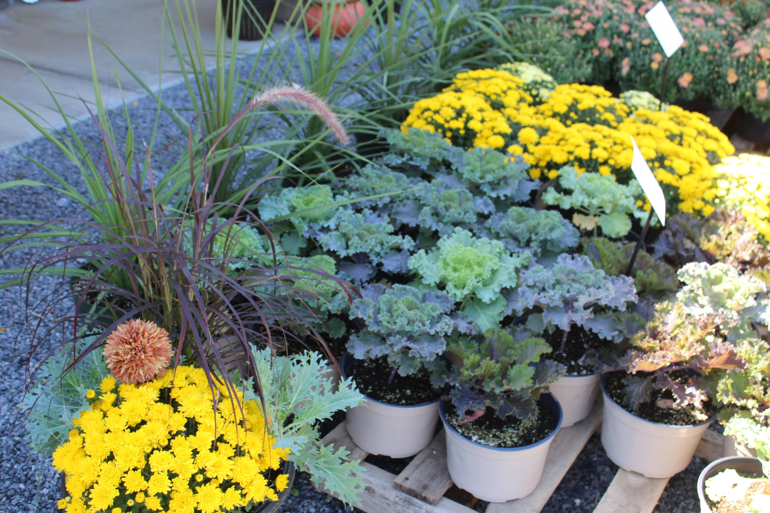 Long Lane Greenhouse Locally owned and operated spring summer annuals perennials tomato plants, heirloom varieties vibrant green ferns tropical plants lush foliage hanging baskets potted plants potted bedding plants flower beds vegetable starts deck home, garden, and landscape poinsettias Christmas varieties mums & fall harvest varieties