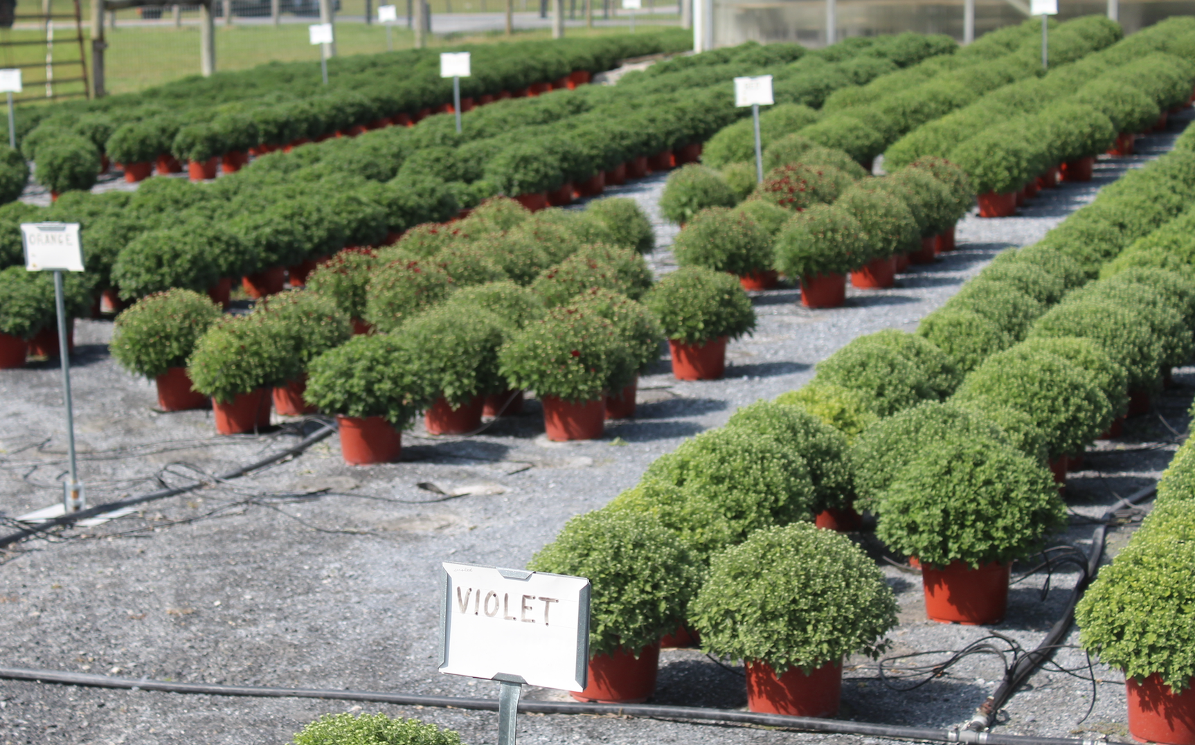 Willow Brook Greenhouse Family Owned & Operated Route 10 flower varieties plants garden supply flowers Home & Garden poinsettias pansies bedding plants Christmas season vegetable plants frames boxes succulents pots fertilizers locally owned